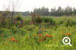 十勝平野の中の紫竹ガーデン